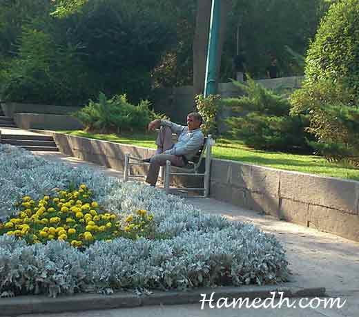 پیرمردی در پارک